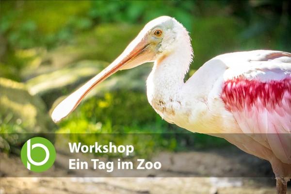 Workshop - Ein Tag im Zoo